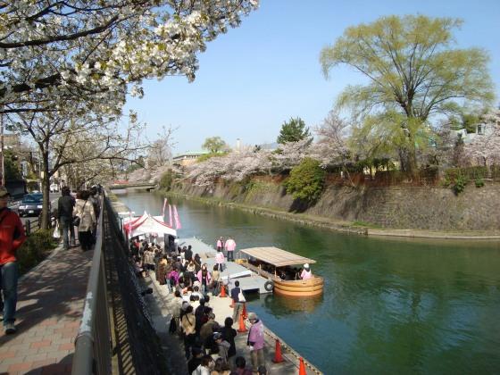 岡崎桜2101 032