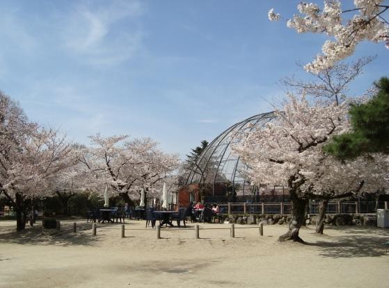 岡崎桜2101 113