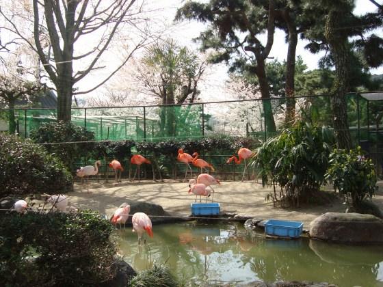 岡崎桜2101 101
