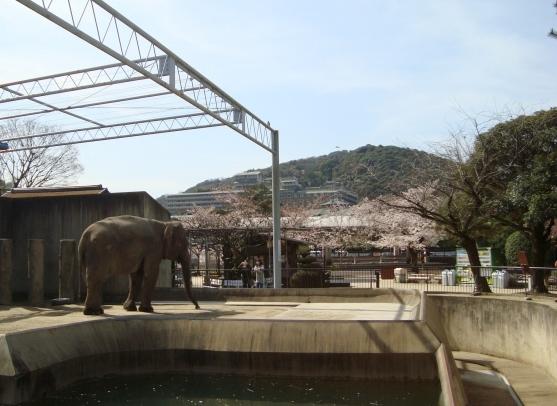 岡崎桜2101 096