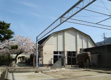 岡崎桜2101 095