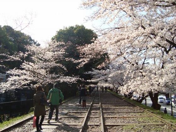 岡崎桜2101 010