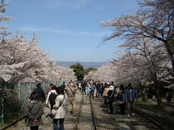 岡崎桜2101 133