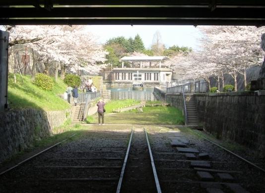 岡崎桜2101 022