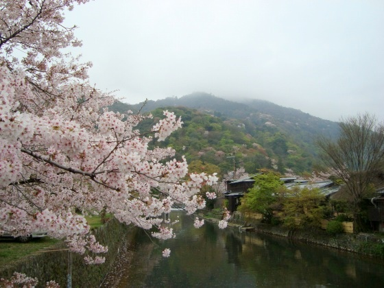 御所嵐山桜2010 139