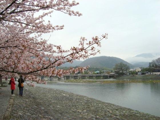 御所嵐山桜2010 145