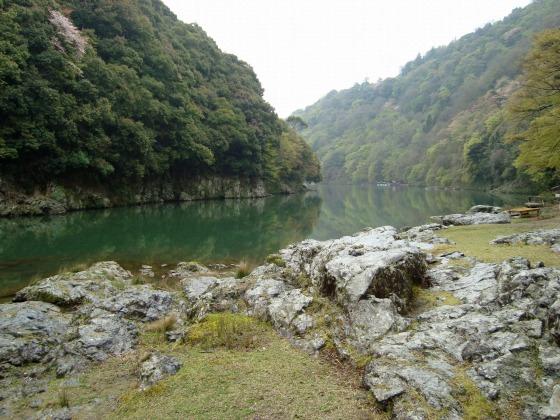 御所嵐山桜2010 180