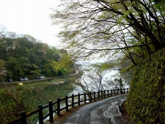 御所嵐山桜2010 177