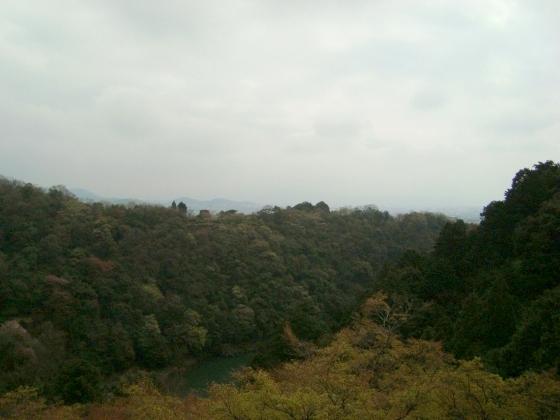 御所嵐山桜2010 203