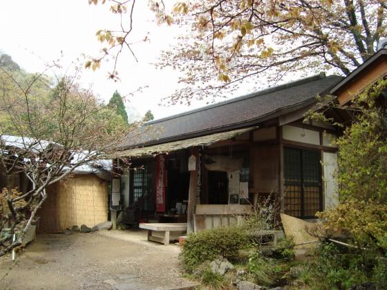 御所嵐山桜2010 200