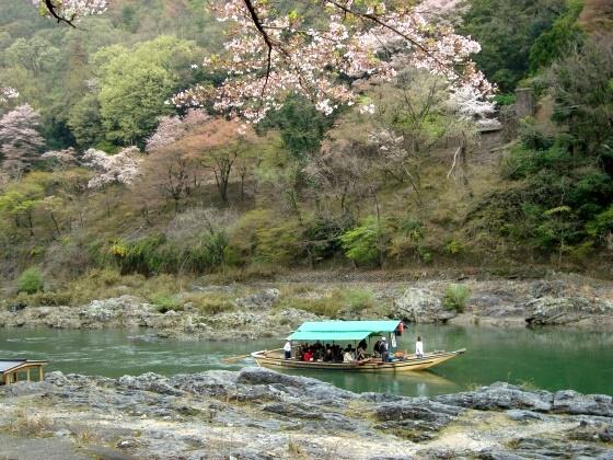 御所嵐山桜2010 225