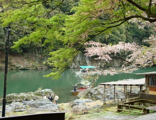 御所嵐山桜2010 221