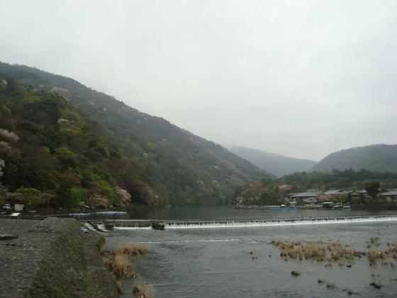 御所嵐山桜2010 158