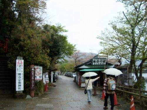 御所嵐山桜2010 164