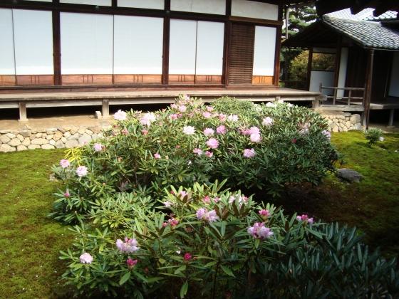 随心院京阪百年 067
