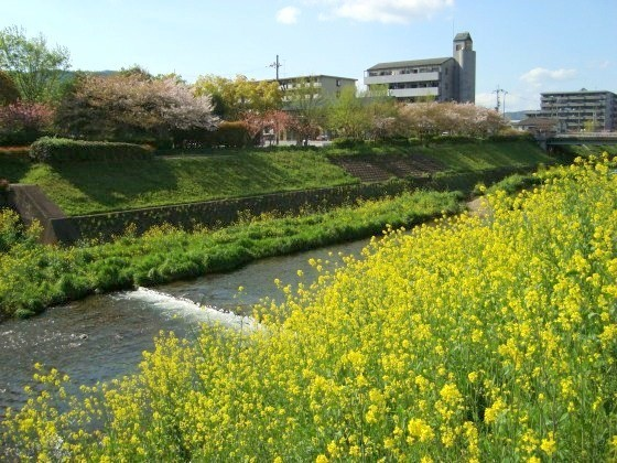 随心院京阪百年 157