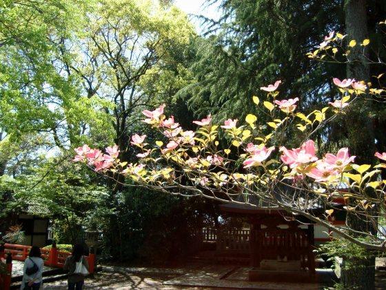 大徳寺2010春 081