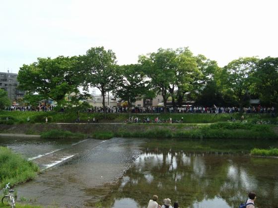 葵祭カキツバタ 040