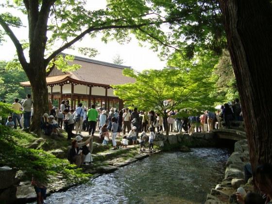 葵祭カキツバタ 062