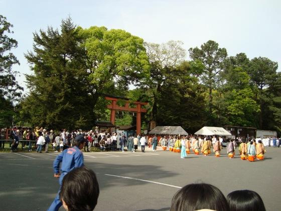 葵祭カキツバタ 071