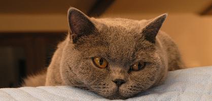 JL_cat.jpg
