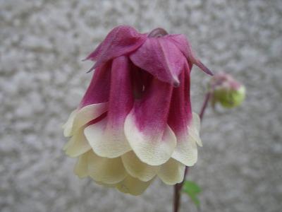 紫  (8)