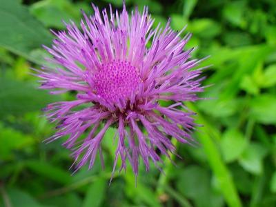 紫  (12)
