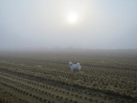 朝靄もや~ん