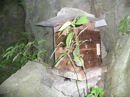 孫分蜂の王台(岩丁場) 10,5,11 001