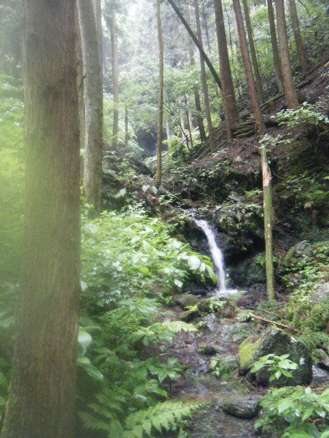 2010_0529高水山0082