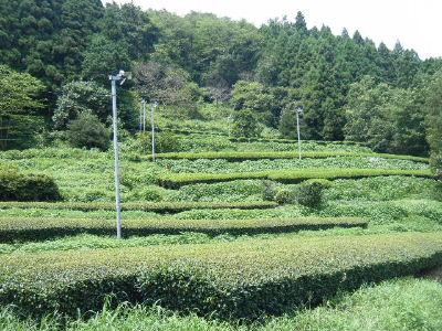 2010_0815高尾・山北0029