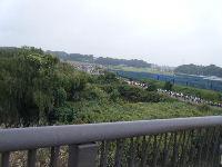 2010_1103手賀沼0066