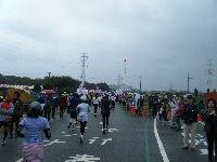 2010_1103手賀沼0077