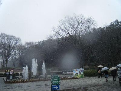 2011_0211森林公園0005