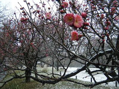 2011_0211森林公園0013