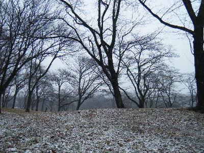 2011_0211森林公園0012