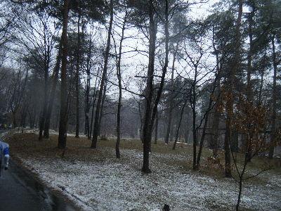 2011_0211森林公園0051