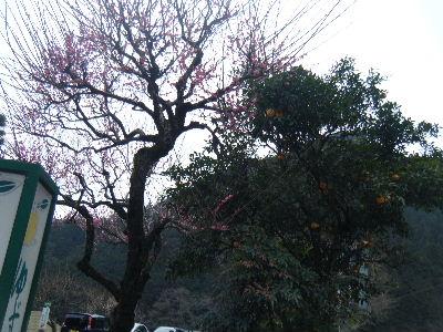 2011_0220青梅0092