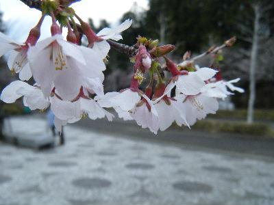 2011_0501チャレンジ富士五湖0051