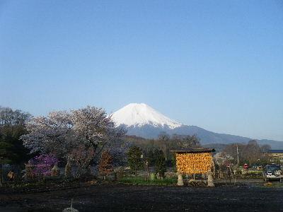 2011_0501富士五湖0135