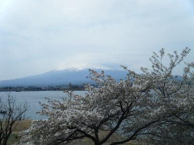 2011_0501富士五湖0180