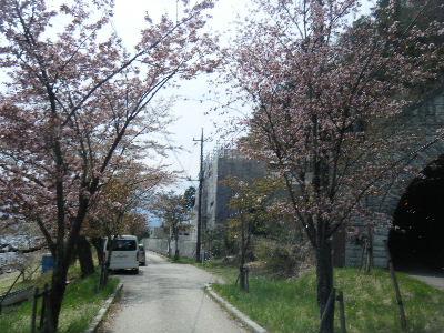 2011_0501富士五湖0179