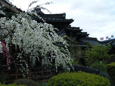 2011_0501富士五湖0209