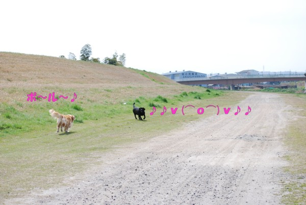 2010.04.13-4