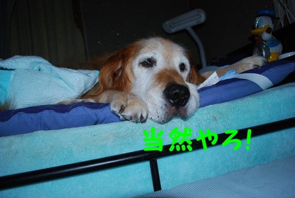 2010.09.20-3