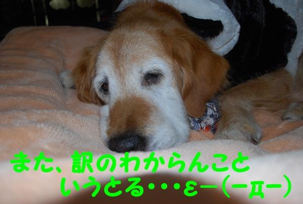 DSC_0005_20110105083710.jpg