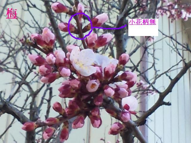 moblog_28b918a5.jpg