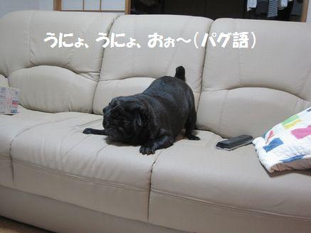 IMG_05540027.jpg