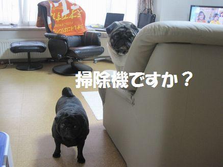 IMG_06930501.jpg