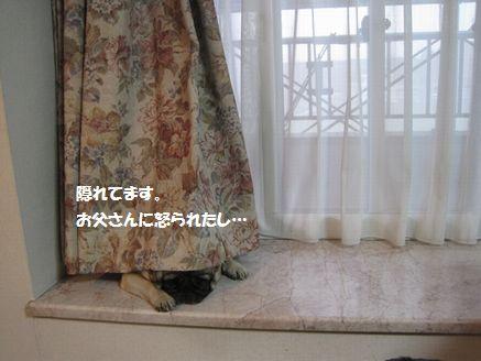 IMG_11150511.jpg